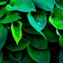 Garden Drops