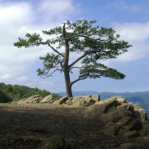 Tree Study One
