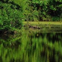 heron&turtles2