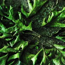leaf-circle1