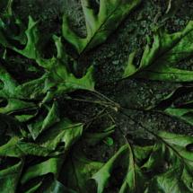 leaf-circle2