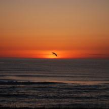 sunset-pelican1