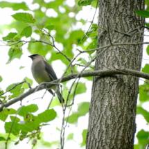 brid in tree