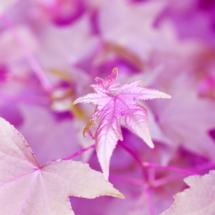 leaf-ferradans