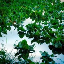 morning marsh 2